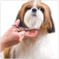 Services At A Luxury Dog Amp Cat Grooming San Jose