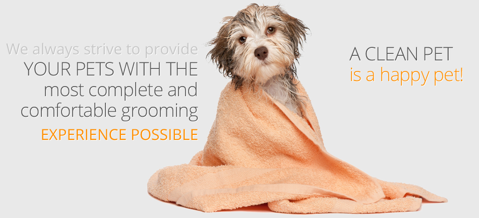 Dog Grooming San Jose