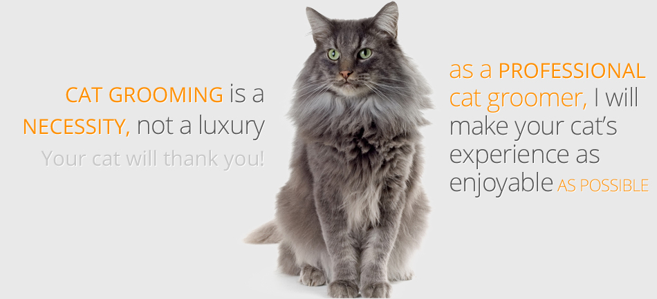 Cat Grooming San Jose